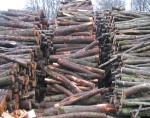Palivové dřevo - kulatina